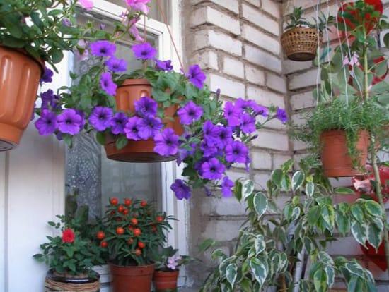 Какой цветник на балконе без ампельных растений