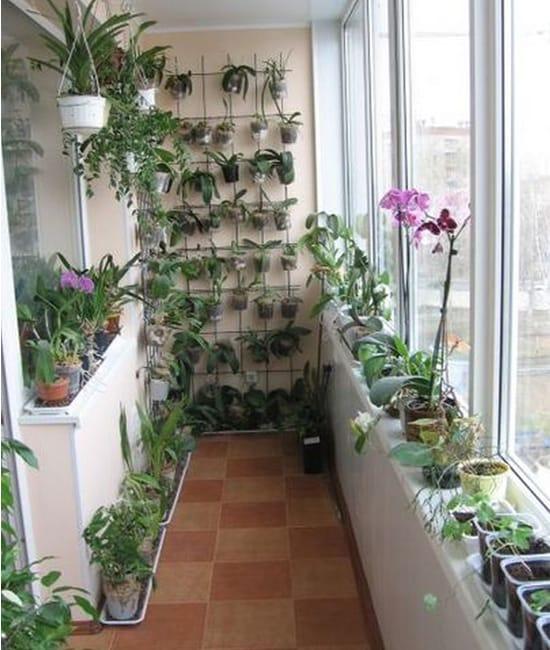 Зимний сад на остекленном балконе