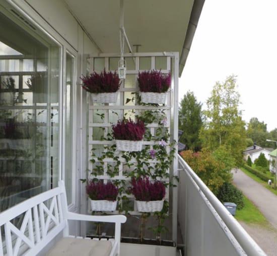 Некоторые растения можно держать на балконе круглый год