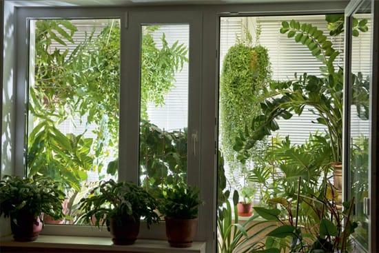 Такой сад требует определенного микроклимата