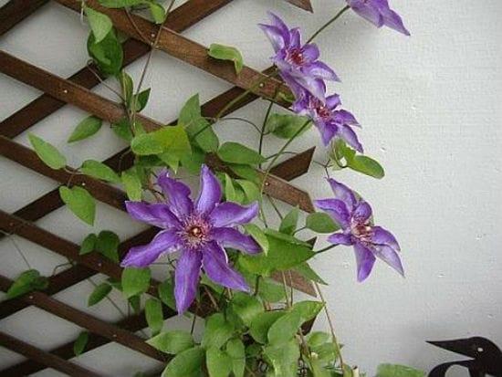 Декоративная решетка для вьющихся растений в беседку
